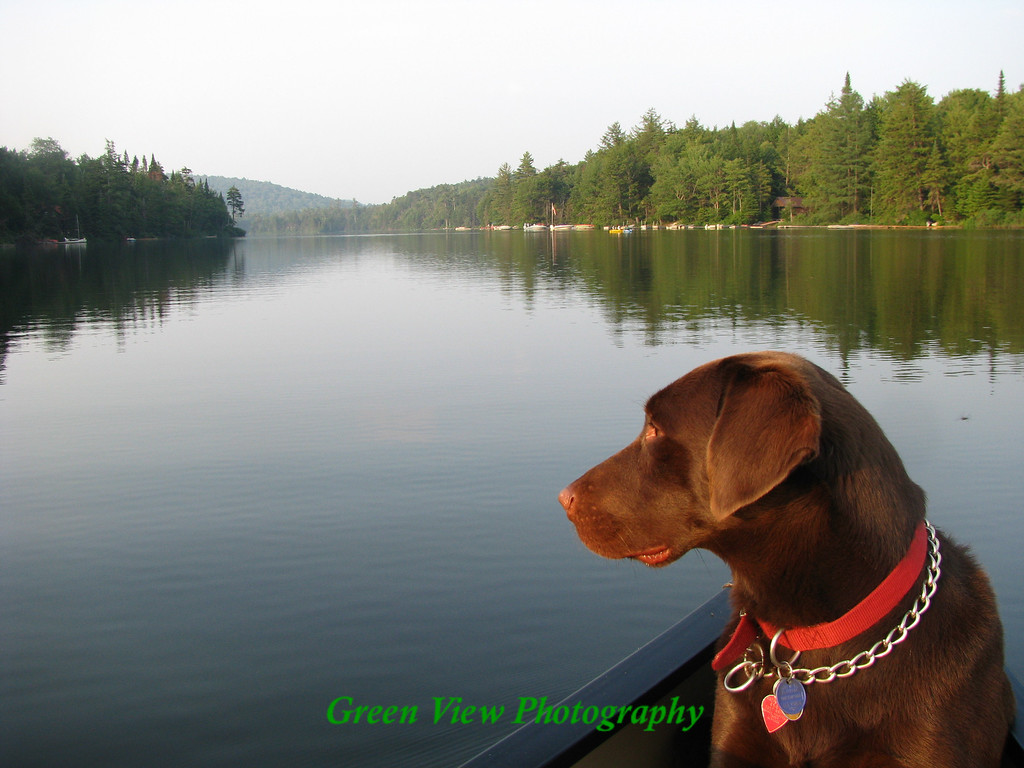 """Enjoying the View"" - Adirondack Life Contest Winner"